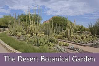 Where to Find Us - The Desert Botanical Garden